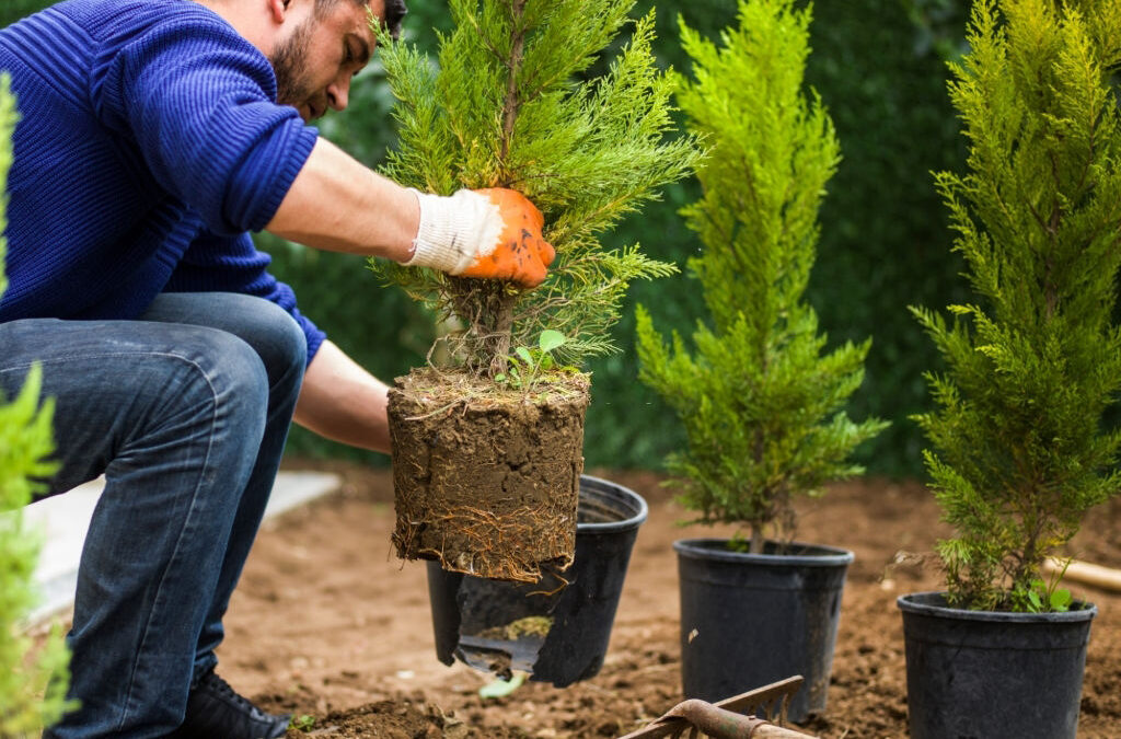 Availing Tree Planting Service – How it Can Help