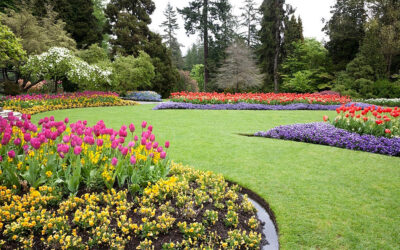 Why Backyard Landscaping Can Beautify Your Home